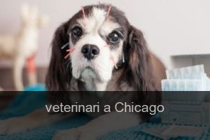 Veterinari a Chicago