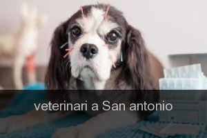 Veterinari a San antonio